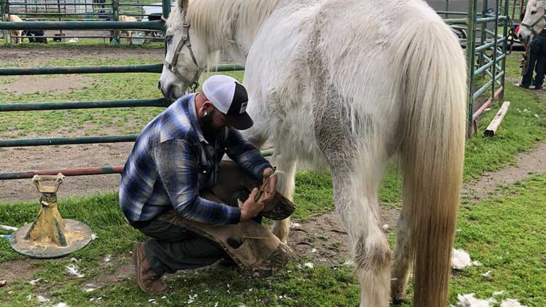 A horseshoeing school student practicing to be a successful horseshoer