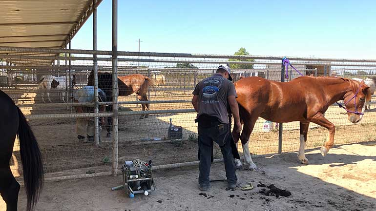 A horseshoeing student getting the job done